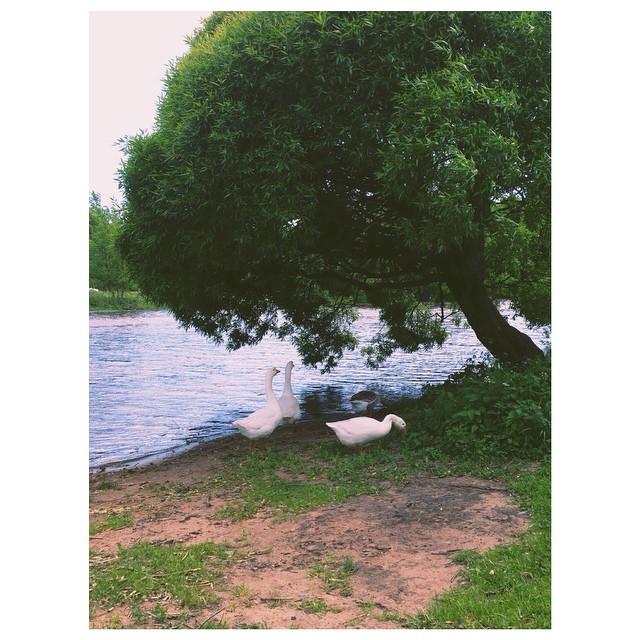 Instagram - #ohgeese #saintpetersburg #northernbeaches