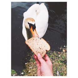 Instagram - just a casual #swanwhat situation 🍞 #moscow