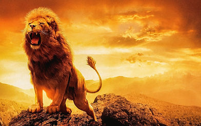 lion-4788378_1920.jpg