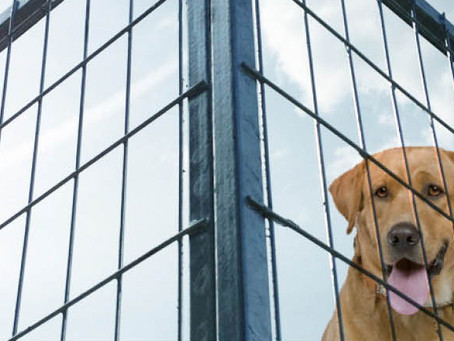 Låt hunden vara ute i höst i vår prisvärda hundgård