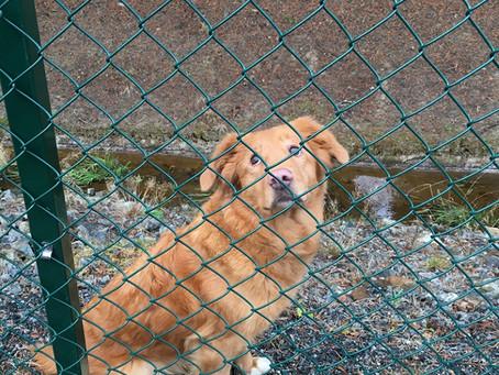 Hundstängsel för säkerhetens skull