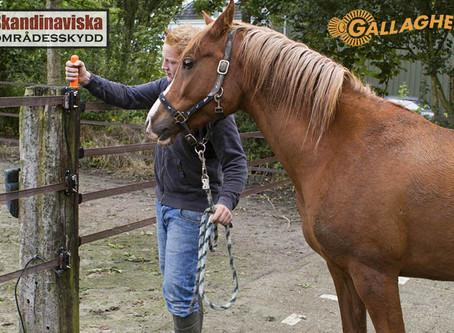 Montera elstängsel för djur - smidigt och enkelt
