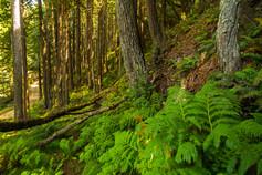 Big Sur Forest Life