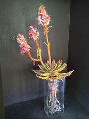 The Lizelss - Aloe in Pot - Fibre and Te