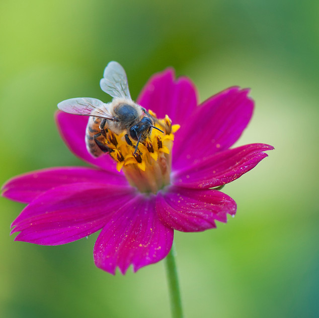 The Importance of  Bee-ing
