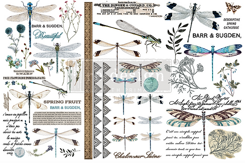 Re-Design Small Transfer -SPRING DRAGONFLY