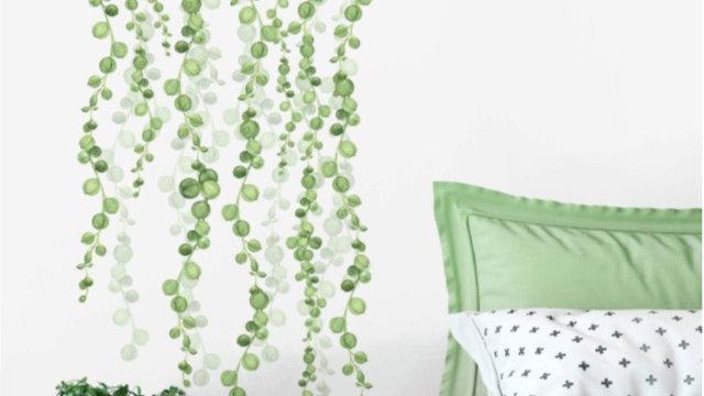String of Pearls Vine