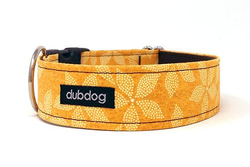 Pumpkin Spice | dog collar