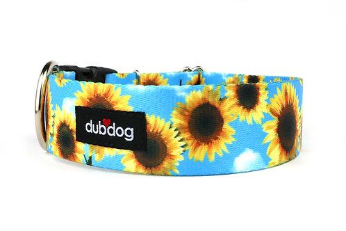 Sunflowers   dog collar