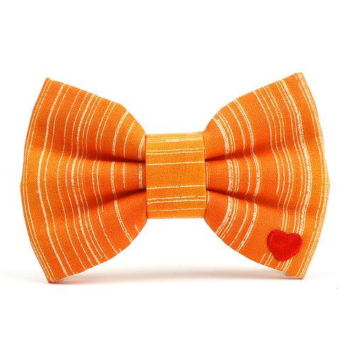 Clementine | dog bow tie