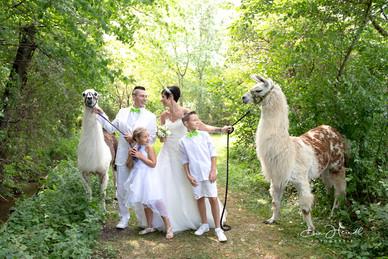 Lama-und--Brautpaar.jpg
