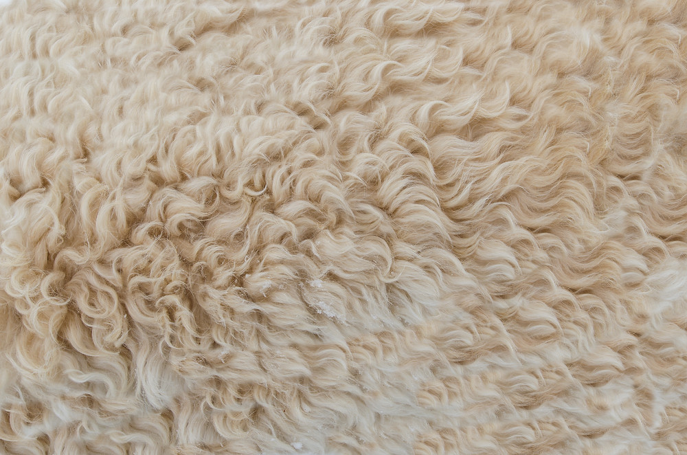 wool: yarn material by rugs.usv handmade hand knotted and hand tufted rugs