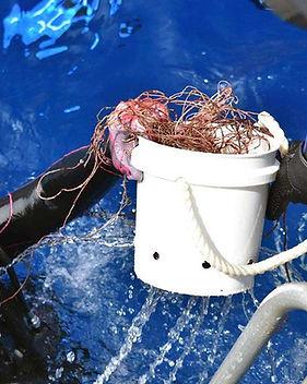 2018-02-17-Diver-handing-off-bucketLR_ed