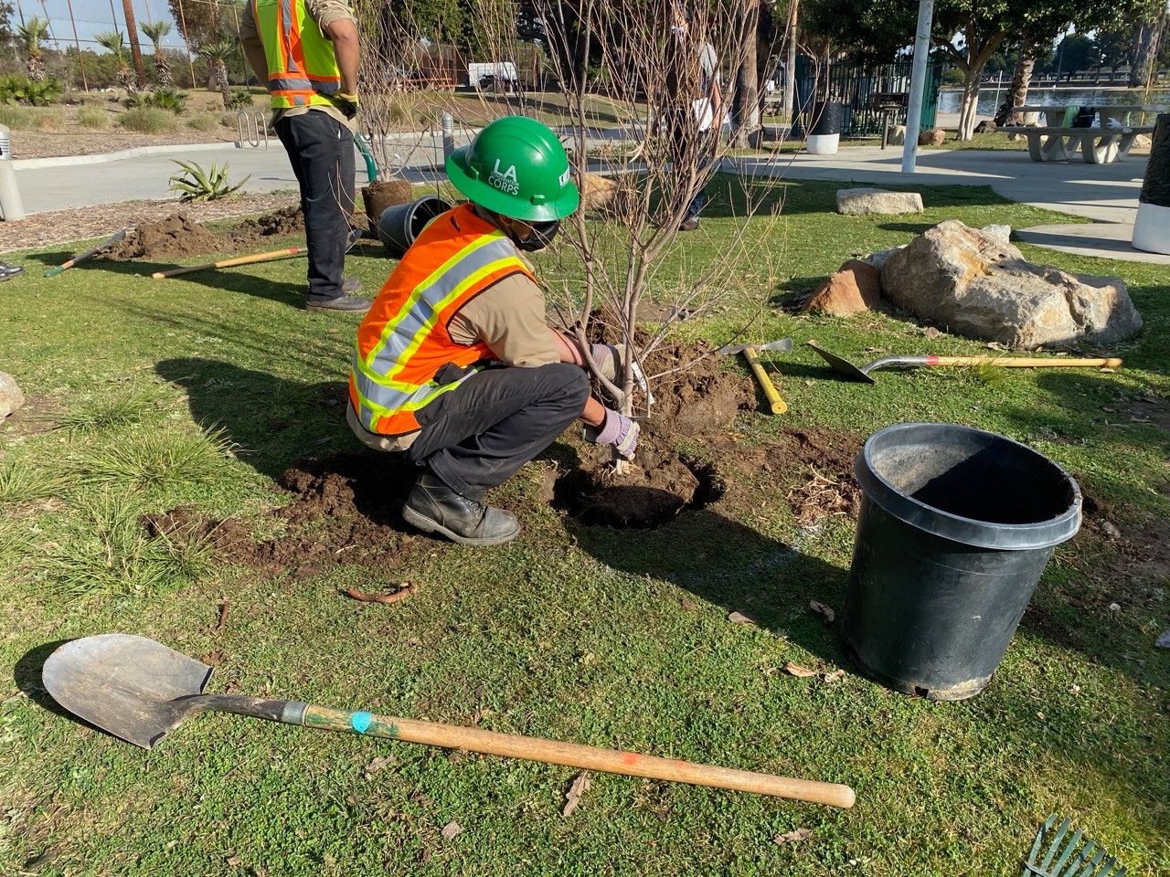 LA Conservation Corps, tree-planting at Alondra Community Regional Park