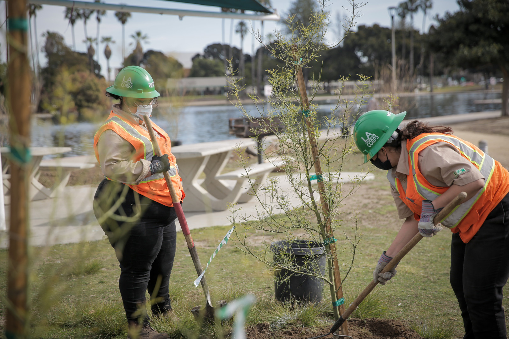 LA Conservation Corps, tree-planting at the Alondra Community Regional Park.