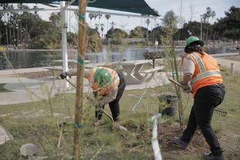 LA Conservation Corps, tree-planting at the Alondra Community Regional Park.