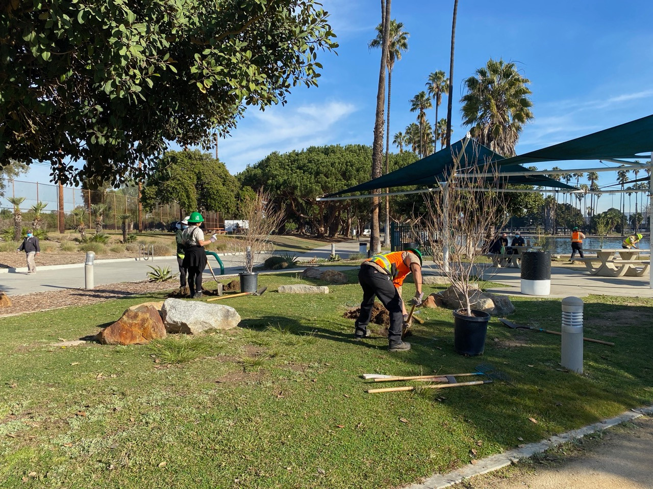 LA Conservation Corps, tree-planting at Alondra Community Regional Park.
