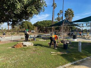 LA Conservation Corps, tree-planting at Alondra Community Regional Park.