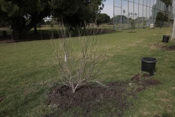 Tree-Planting at Alondra Community Regional Park.