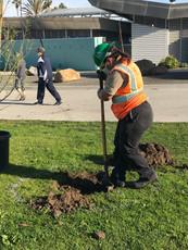 LA Conservation Corps crew member, tree-planting at Alondra Community Regional Park