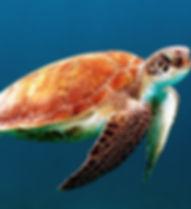 turtle-863336_640.jpg