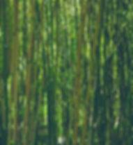 bamboo-828703_640.jpg