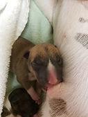 KoKo's Ronin Pup 1.jpg