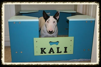 miniature bull terrers, miniature bull terriers for sale