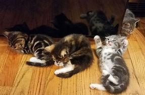 kittens 1.jpg