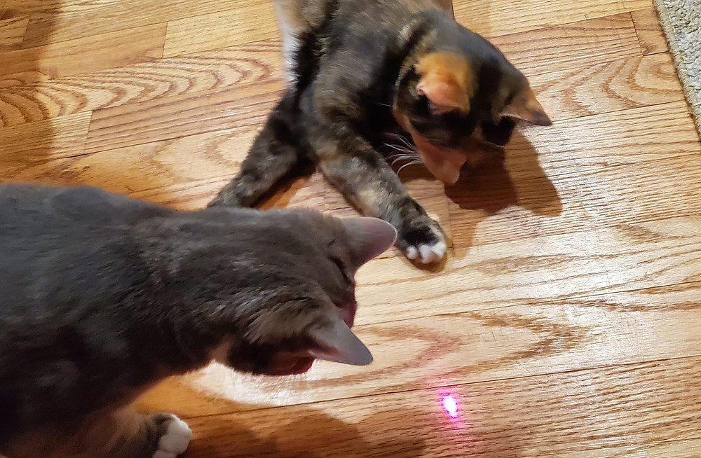 Chasing lasers pic