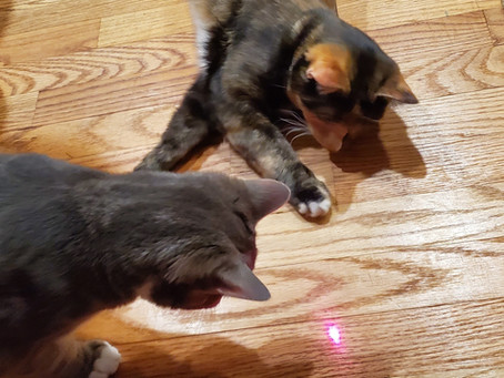 Chasing Lasers