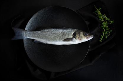 Christina Groth-Biswas - Sea Bass