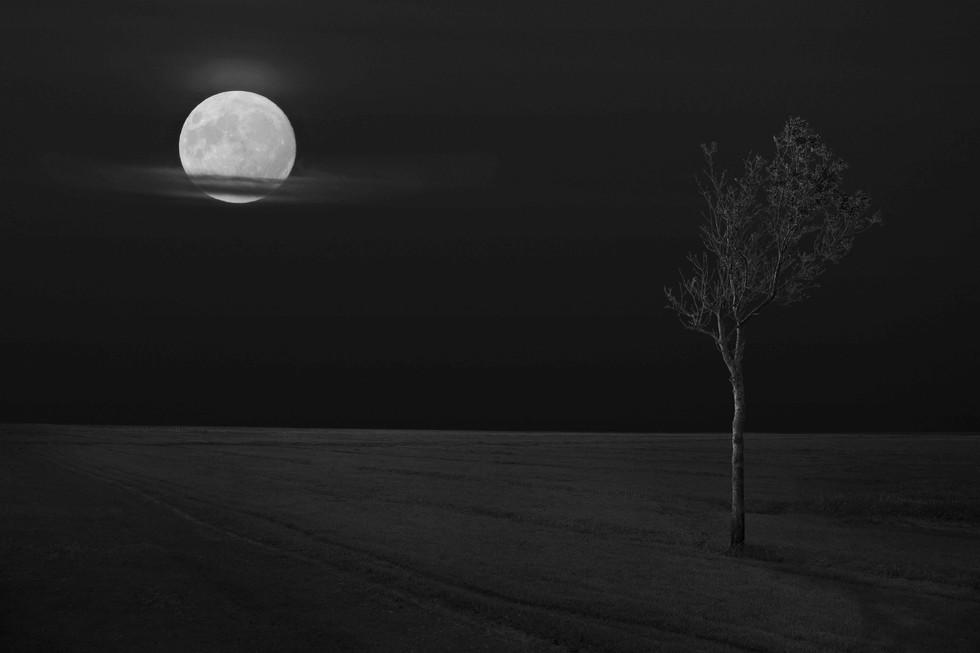 Tree and Moon.jpg