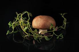 Mushroom & Thyme