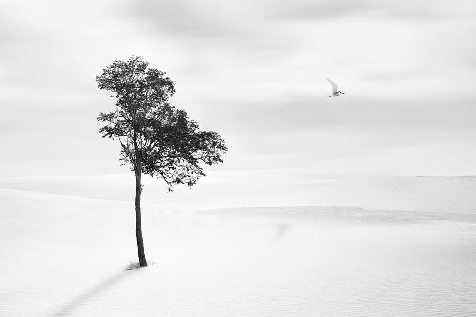 Lone tree and bird