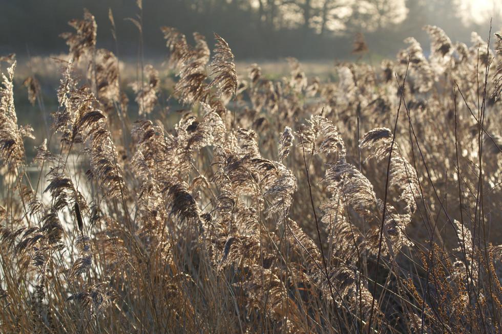 Grass_print.jpg