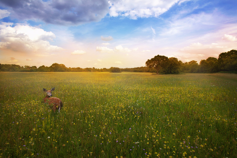 Flower_meadow.jpg