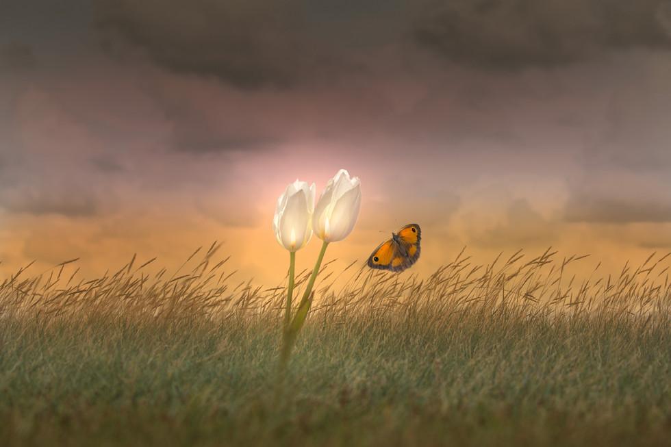 Glowing_flowers.jpg