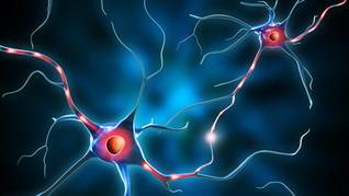 Kan maten påvirke våre hormoner?