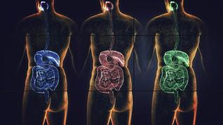 Hvordan påvirker bakteriene vår helse og adferd?