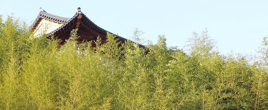 bambus 18.jpg