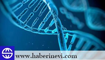 Bilim İnsanları İlk Kez Yaşayan ve Programlanabilen Organizma Üretti