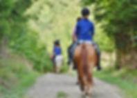 horses-3635517_1280.jpg