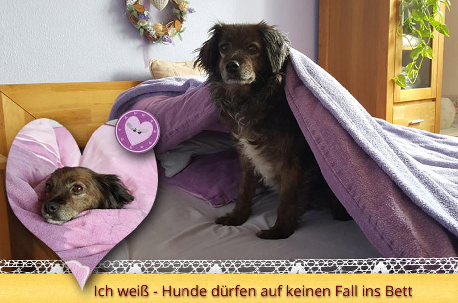 Ich weiß - Hunde dürfen auf keinen Fall ins Bett
