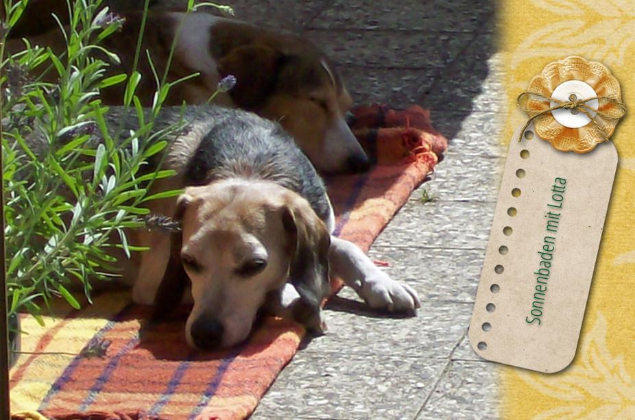 Sonnenbaden mit Lotta