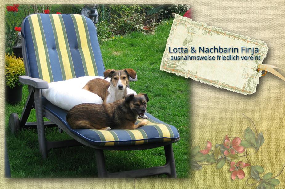 Lotta und Nachbarin Finja - ausnahmsweise friedlich vereint