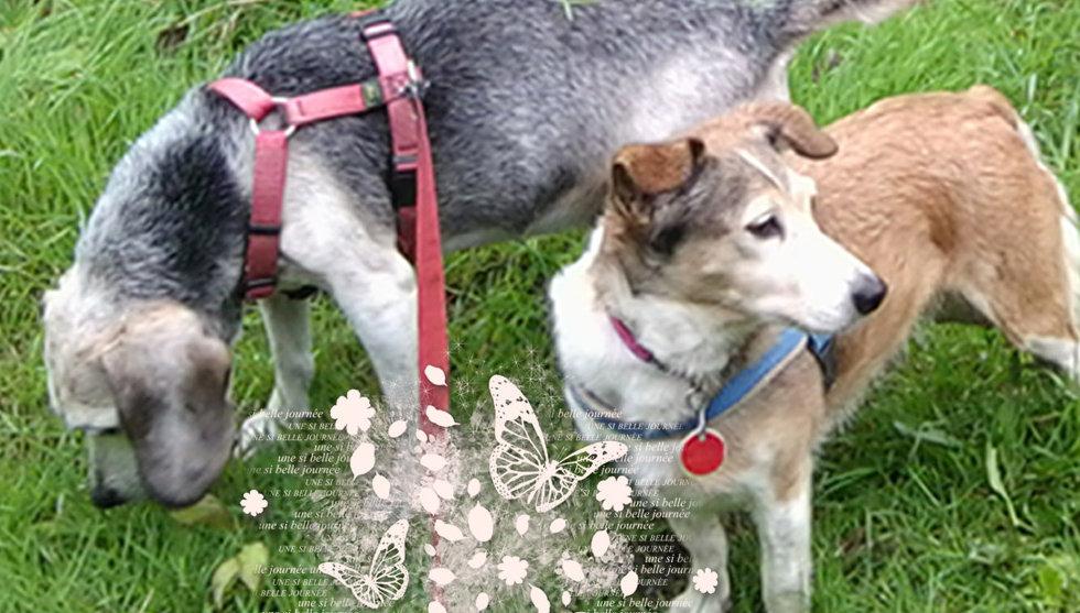 patenhunde_header.jpg