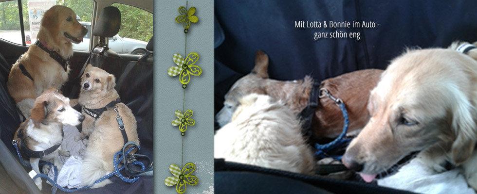 Mit Lotta & Bonnie im Auto