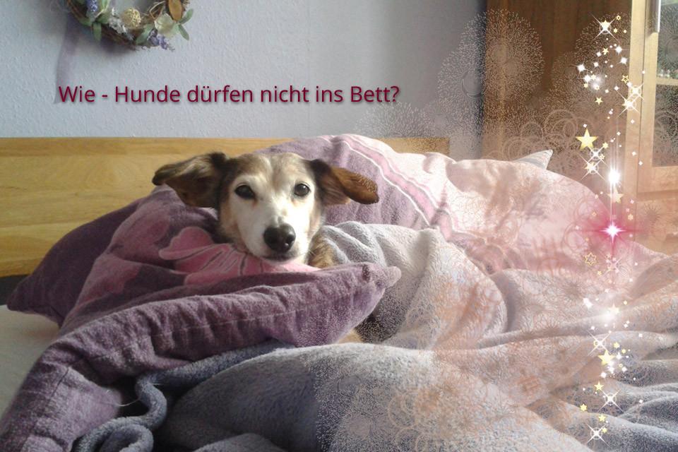 Wie - Hunde dürfen nicht ins Bett?