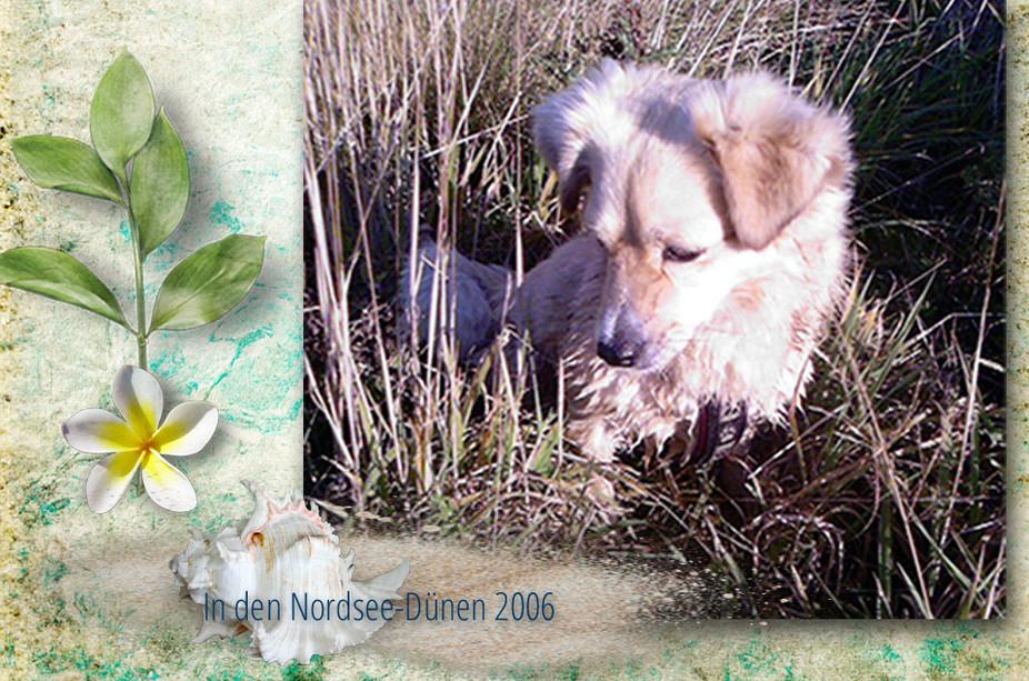 In den Nordsee-Dünen 2006